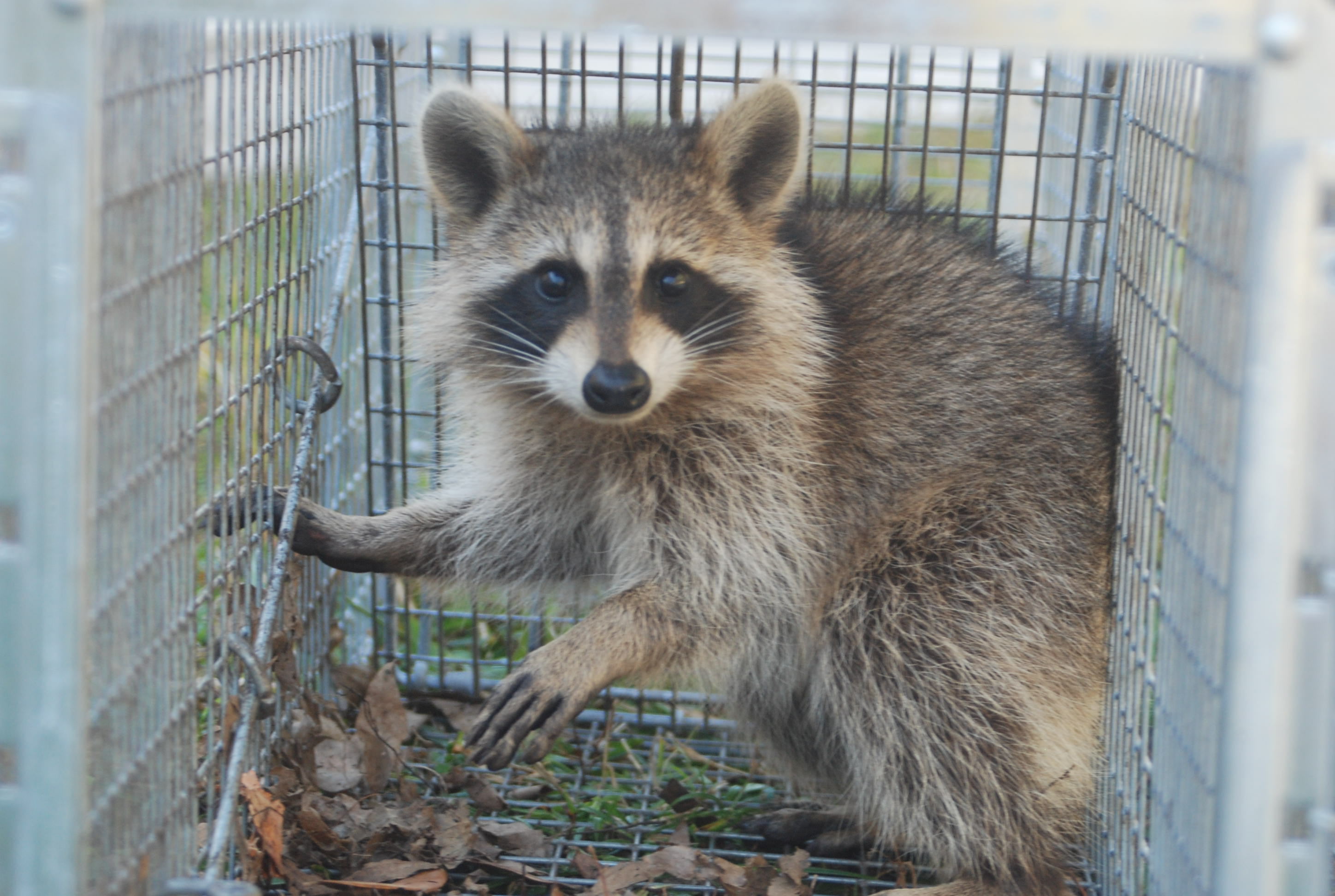 wildlife removal services