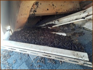 Bat Guano in Soffit