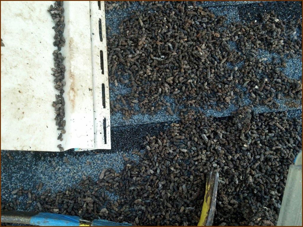 bat poop, home damage, bat removal