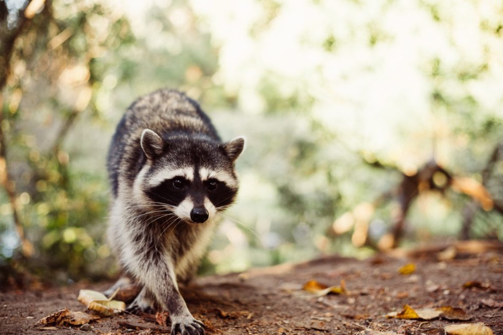 Wildlife Removal Specialists