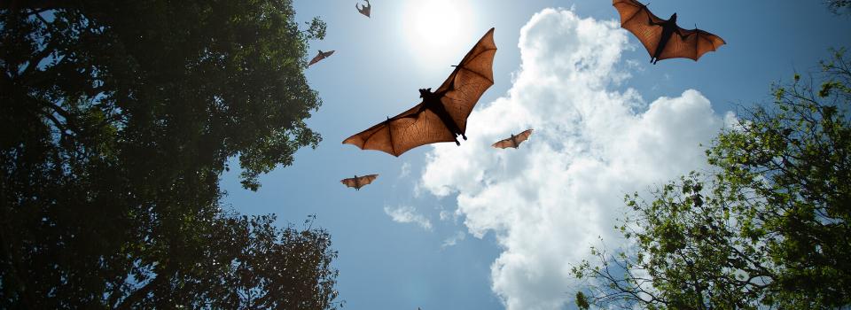 Batt exclusion, bat removal