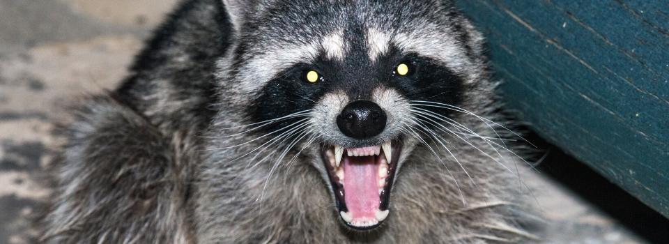 Animal Control Virginia, Wildlife Control Services