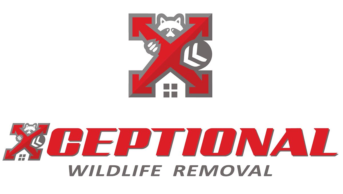 Xceptional Wildlife Removal
