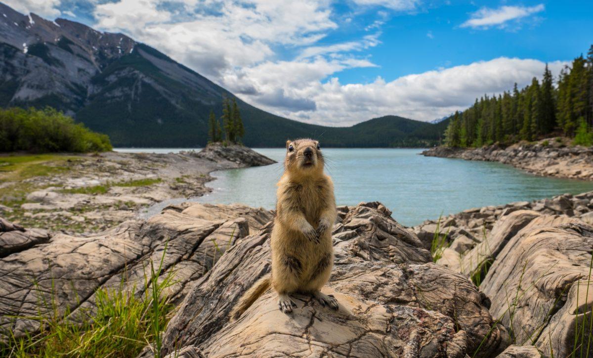 humane wildlife removal in Virginia