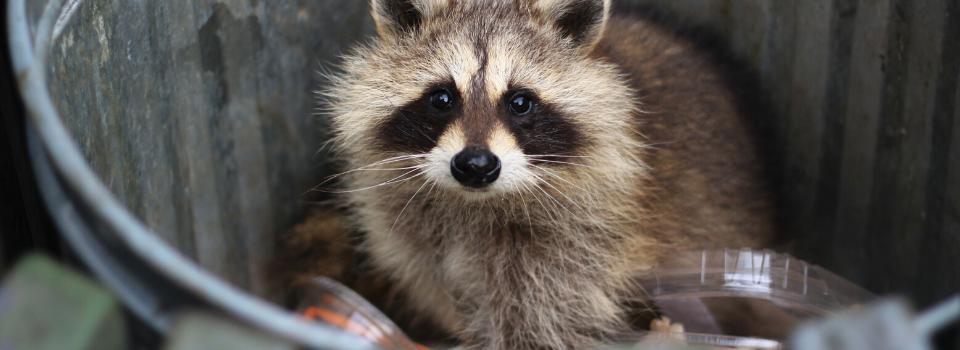 Pennsylvania Animal Control, Wildlife Removal