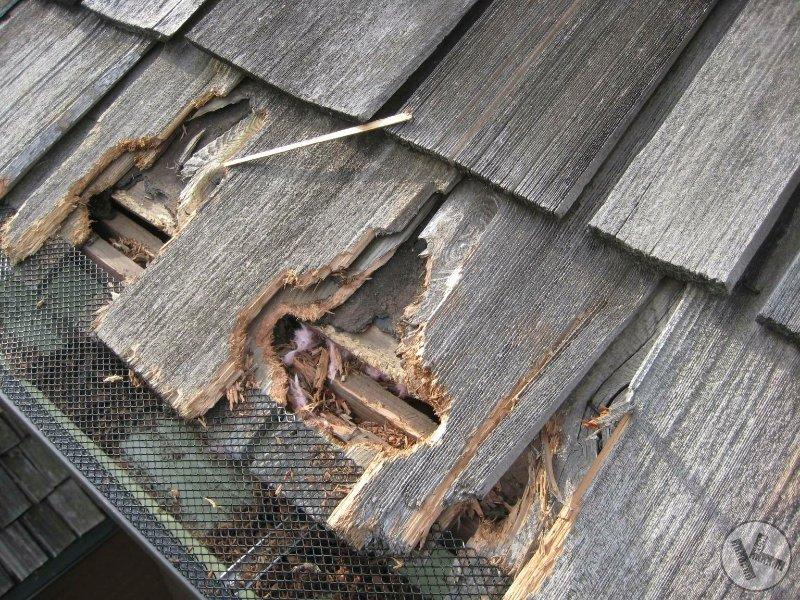 squirrel damage, home repairs, wildlife damage repair