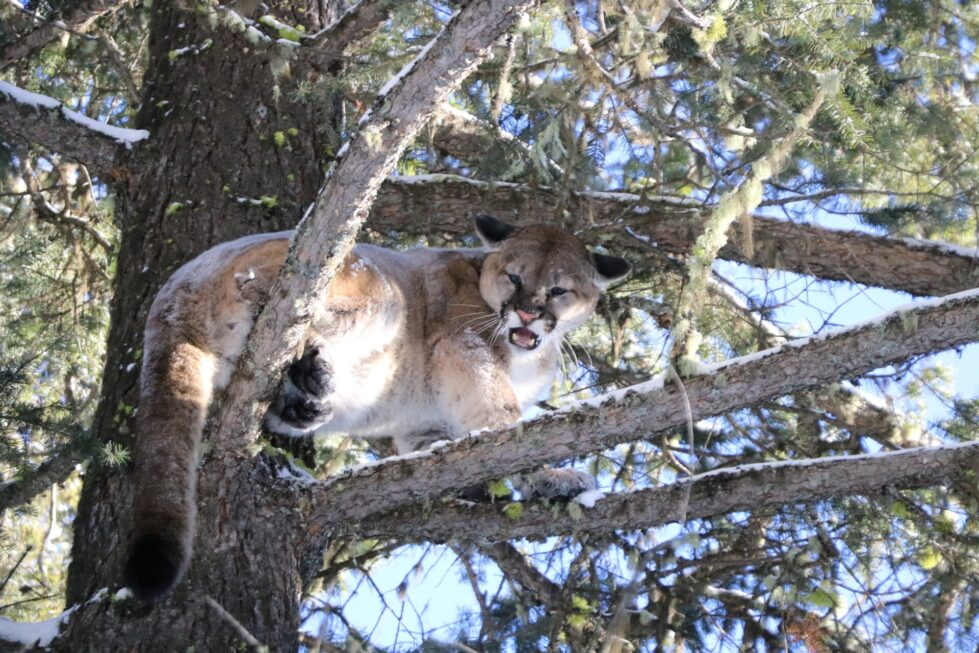 Deadly wildlife around the home in US