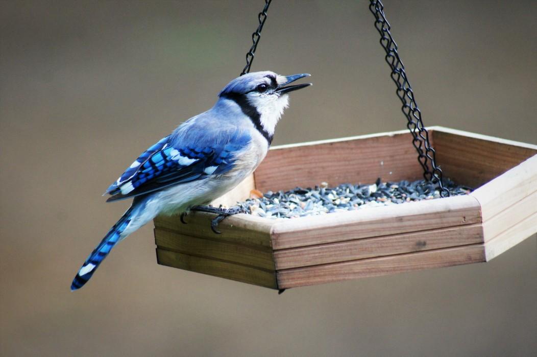 prevent mice around bird feeders