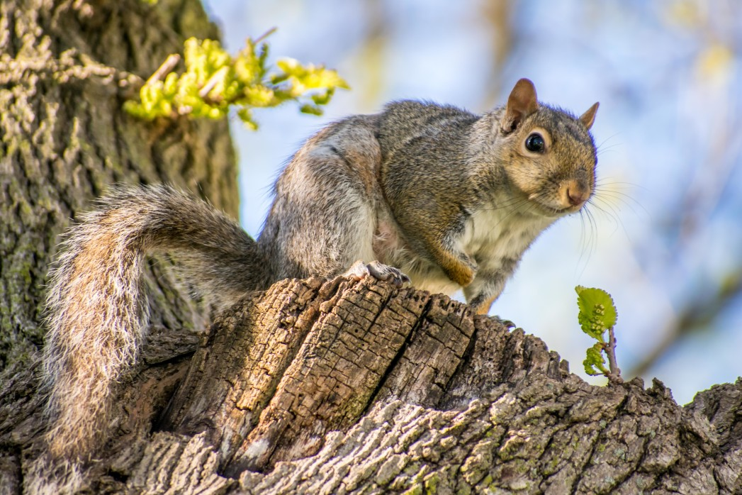pest control tips for fall